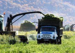 Камчатским сельхозтоваропроизводителям доступны 70 мер государственной поддержки