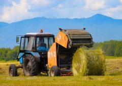 Более 5 тысяч тонн сенажа и 12 тысяч тонн силоса заготовили аграрии Камчатки