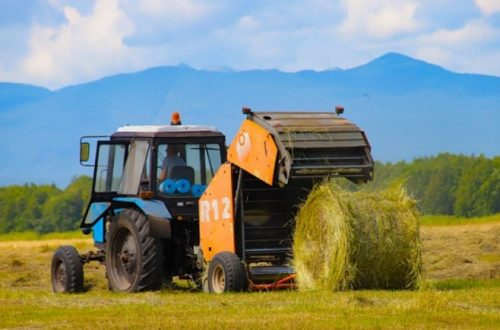 senazh-i-silos-zagotovili-agrarii-kamchatki