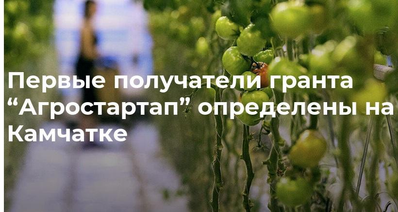 na-kamchatke-opredeleny-pervye-poluchateli-granta-agrostartap