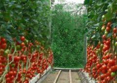 Владимир Солодов объяснил, как планирует обеспечить камчатцев доступными местными огурцами и помидорами