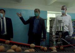 Камчатцы скоро смогут купить белые яйца от «Пионерской»: глава региона ознакомился с новиками производства на птицефабрике