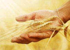 Объявление о проведении конкурсного отбора на предоставление грантов «Агростартап» на реализацию проектов создания и (или) развития хозяйства в Камчатском крае