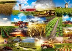 Прием заявок на конкурс грантов для начинающих сельхозпроизводителей начнется в ближайшие дни